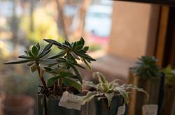 plant_02
