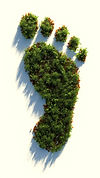Carbon footprint forest.jpg