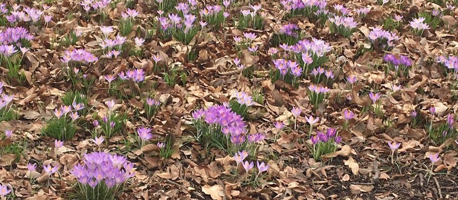 Poem: Spring Stirring