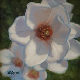 Magnolia Morning, 6x6 web.jpg