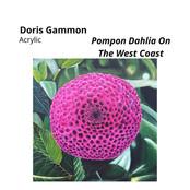 Pompon Dahlia On The West Coast