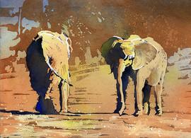 Elephants IV
