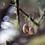 Thumbnail: ABALONE EARRINGS (SMALLER)