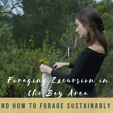 FORAGING EXCURSION IN THE BAY AREA AND HOW TO FORAGE SUSTAINABLY