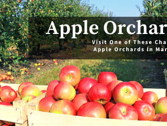Visit One of These Charming Apple Orchards In Maryland