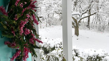 Let's Boost Your Winter Curb Appeal