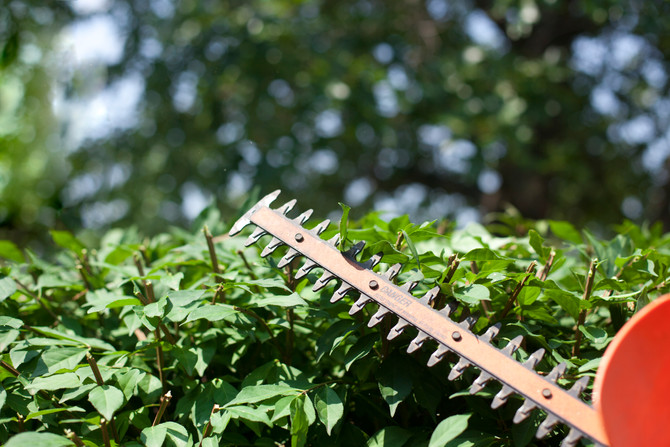 Tips for Keeping Up the Yard