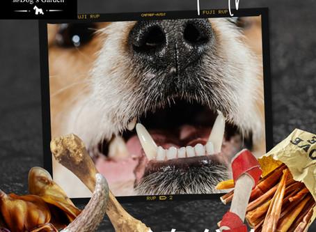 如何選擇狗狗潔齒骨❓