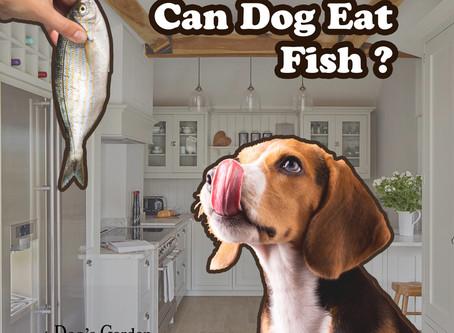 食魚對狗狗有益嗎?