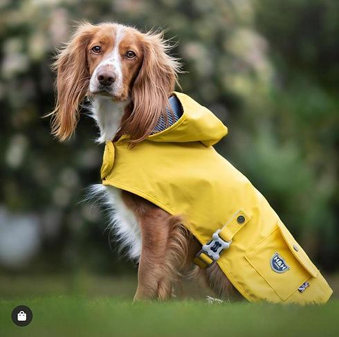 raincoat yellow.jpg
