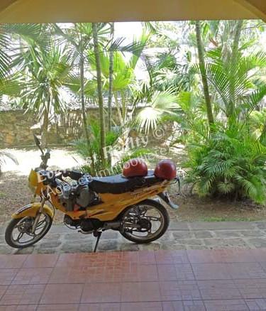 Garden view- Real Estate Agency Mauritius