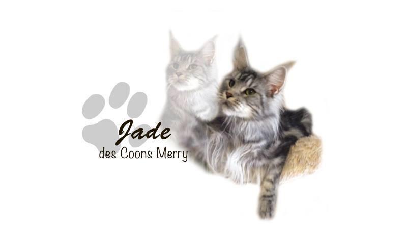 Jade _ Coons Merry