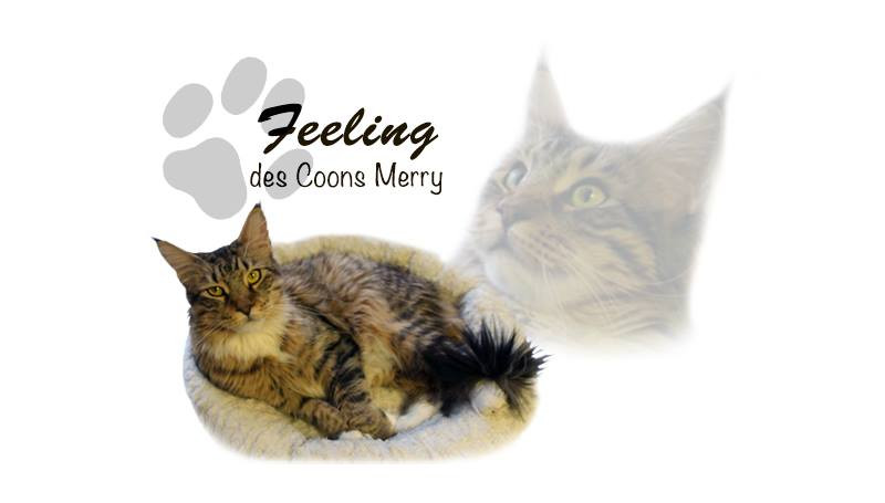 Felling _ Coons Merry
