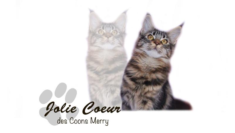 Jolie Coeur _ Coons Merry