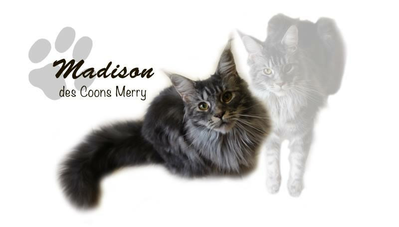 Madison _ Coons Merry