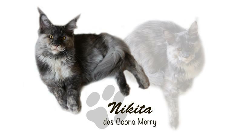 Nikita _ Coons Merry