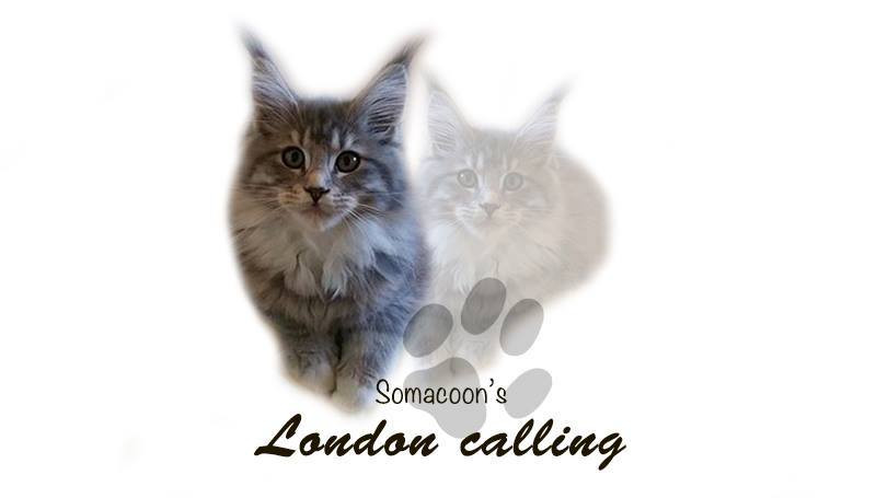 London Calling _ Somacoon's