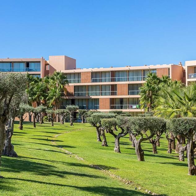 Jardins, oliviers et palmiers