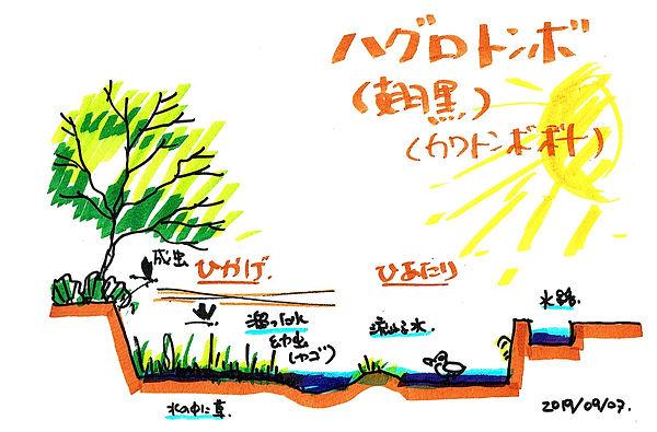 河合生態系スケッチ修正版.jpg