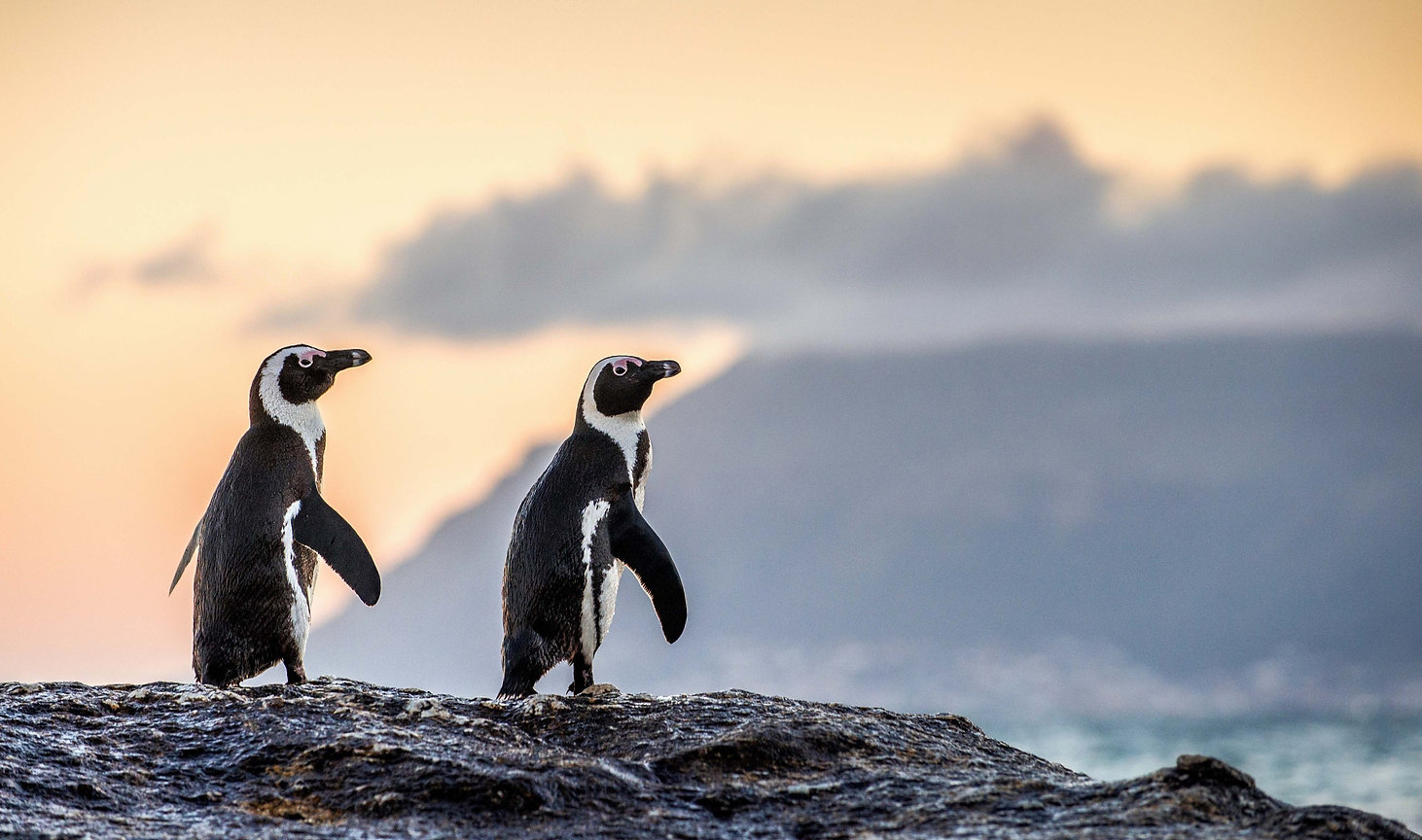 Penguins_edited.jpg