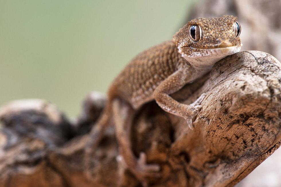 Lizard smaller.jpg