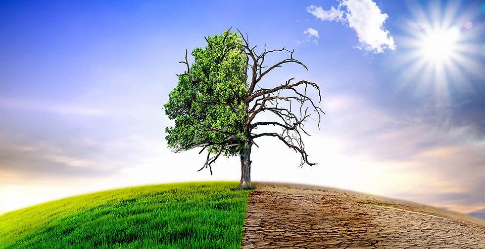 Dead & alive tree.jpg