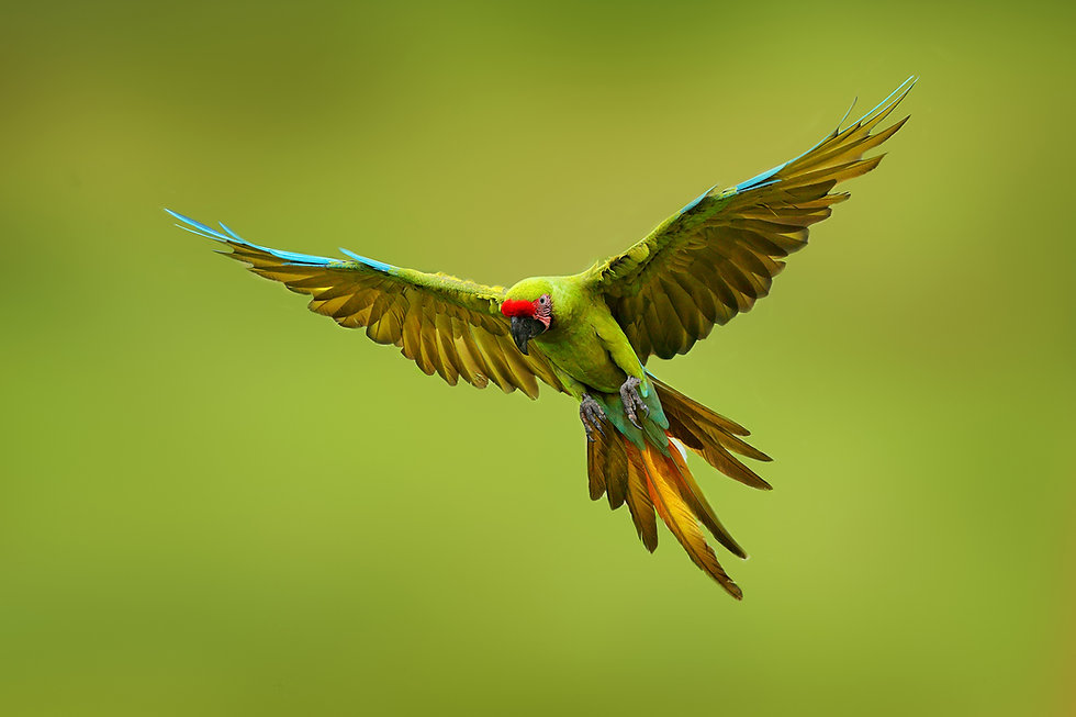 Parrot smaller.jpg
