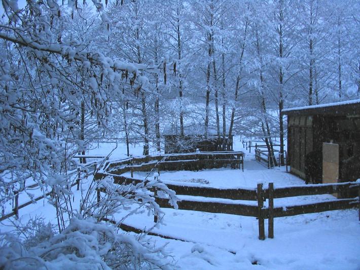 Paddock im Winter