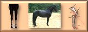 Pferdebeurteilung.png