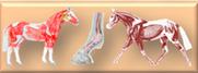 muskulatur, sehnen, bänder.png