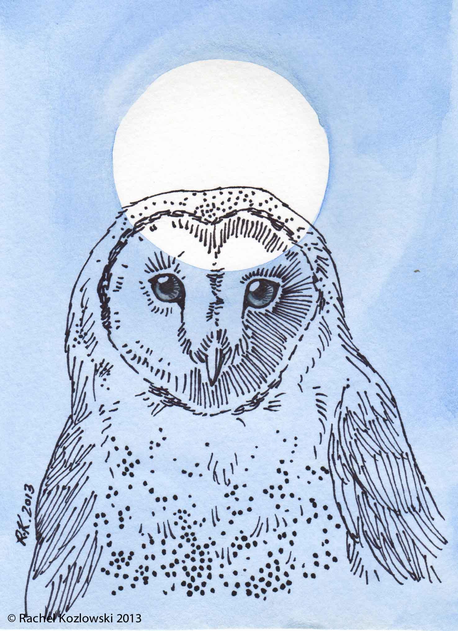 Barn Owl Illustration