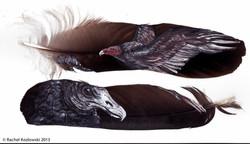 Turkey & Black Vulture