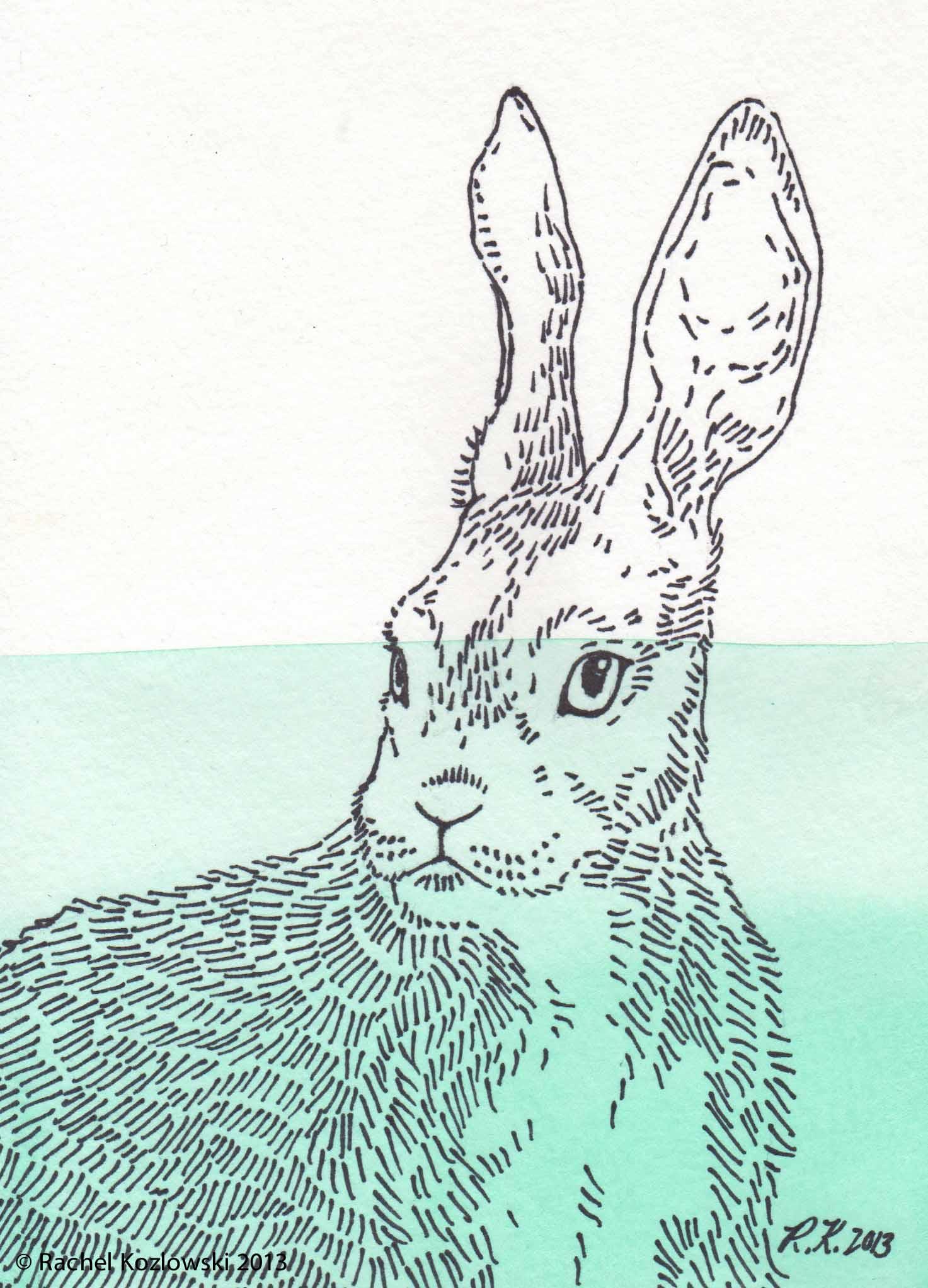 Hare Illustration