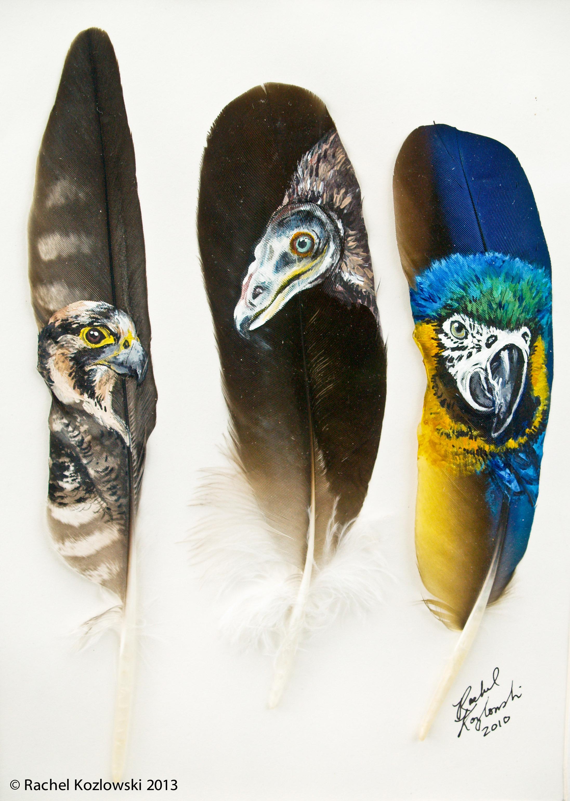 Falcon, Vulture & Macaw