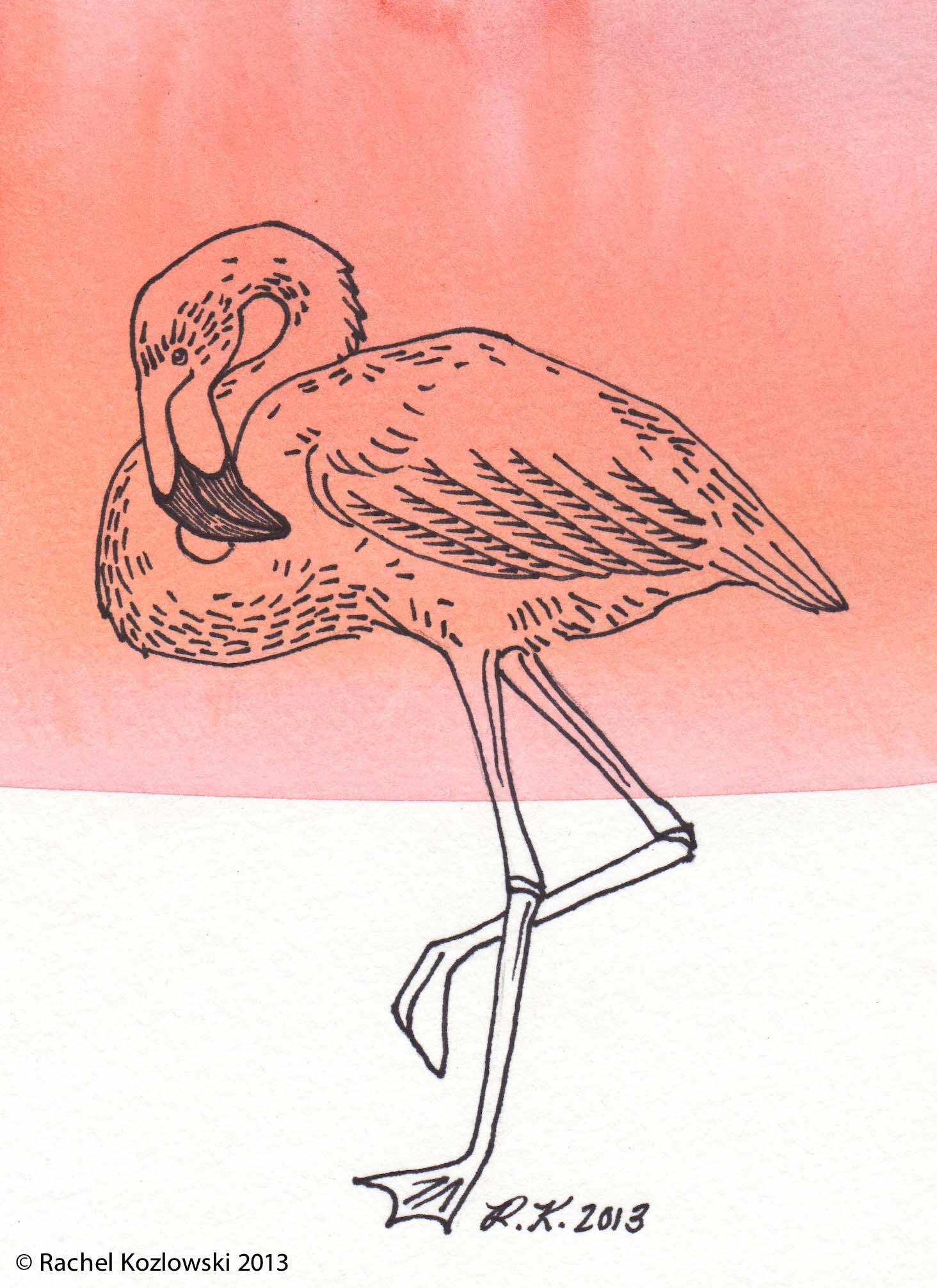 Flamingo II Illustration