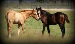 2014 foals together