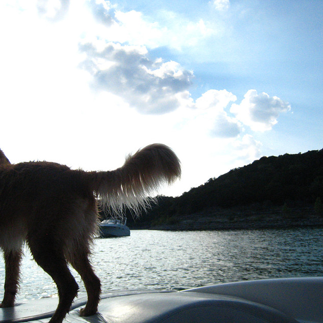 Golden Retriever Lake Austin Boat