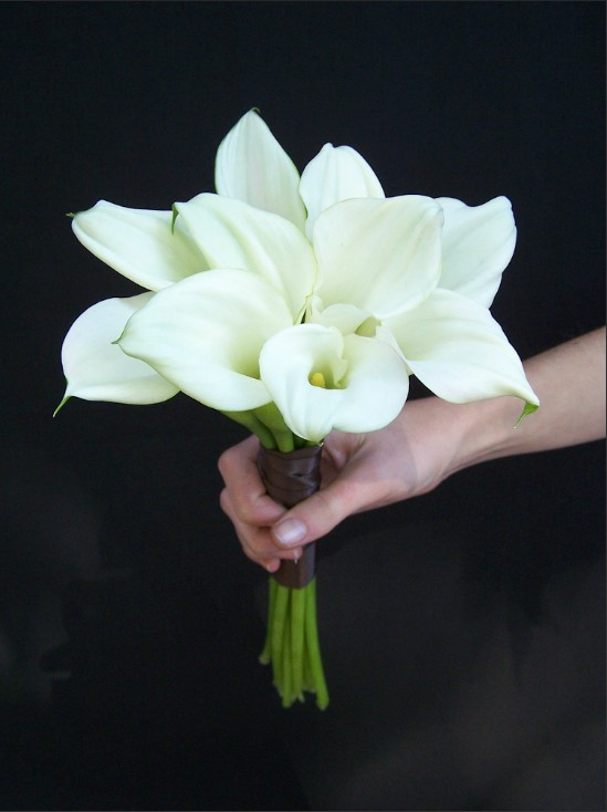 white callas with chocolate wrap