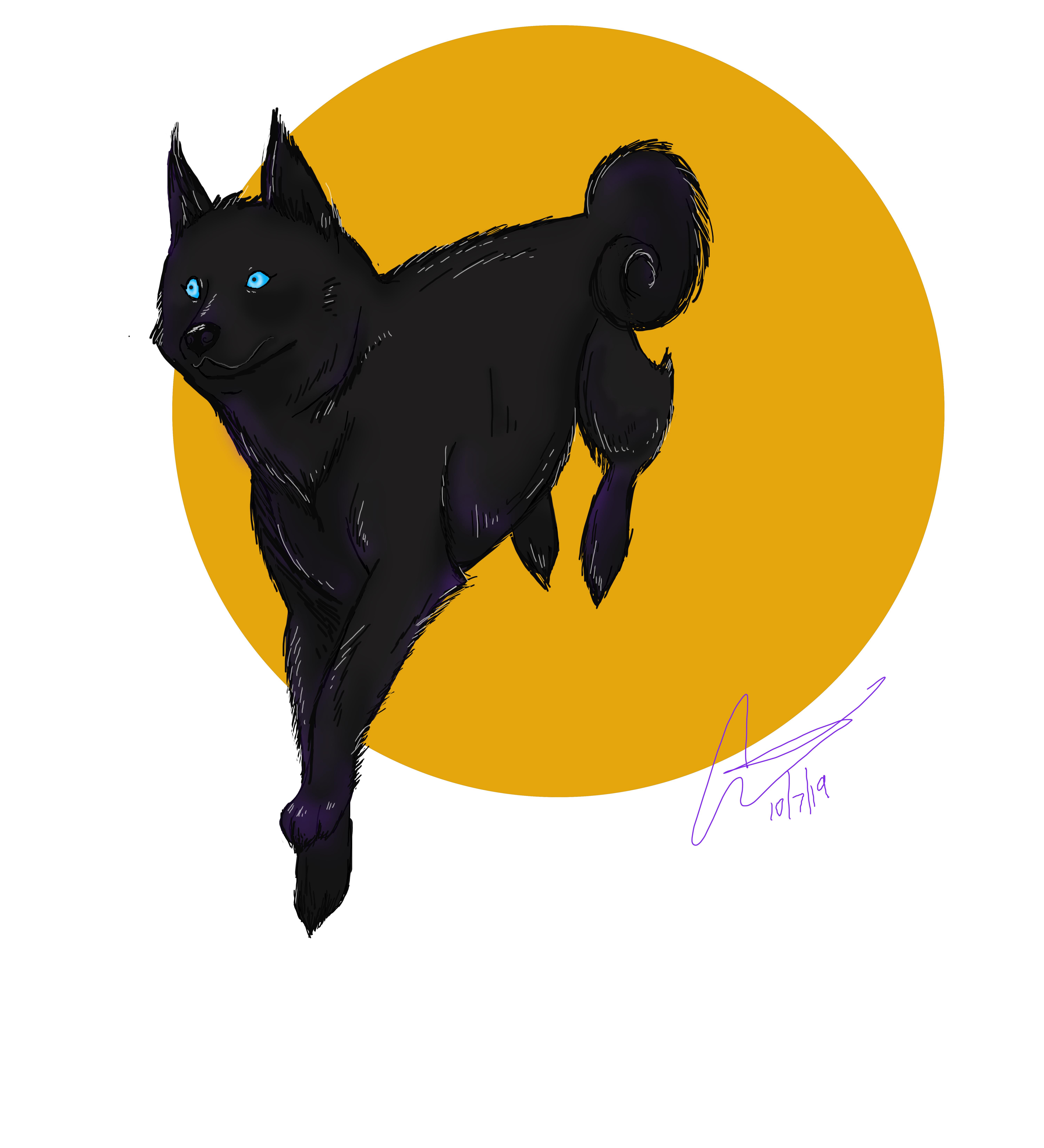 BlackHusky