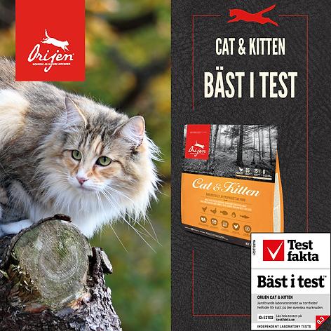 SoMe - Cat & kitten - Bäst i test.png