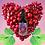 Thumbnail: Clavo-Huasca Aphrodisiac Elixir
