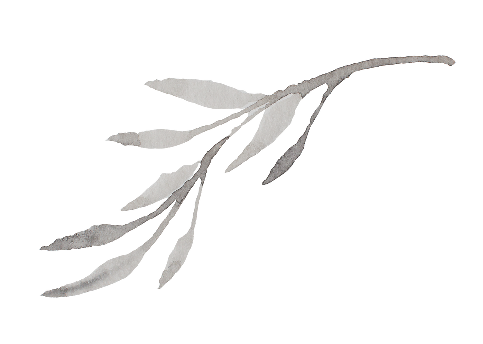 Brand Element 3 __ Watercolor Branch.png