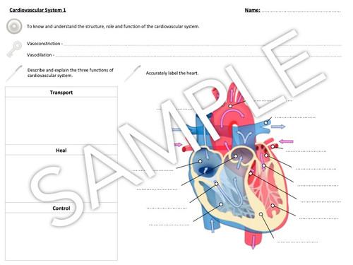 heart: Labelled Heart Diagram Gcse Pe