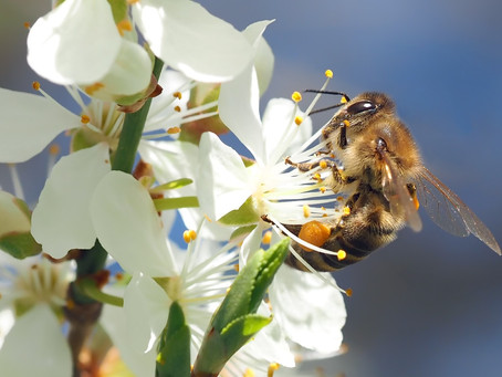 Environmental toxins everywhere – Immune system bye-bye?