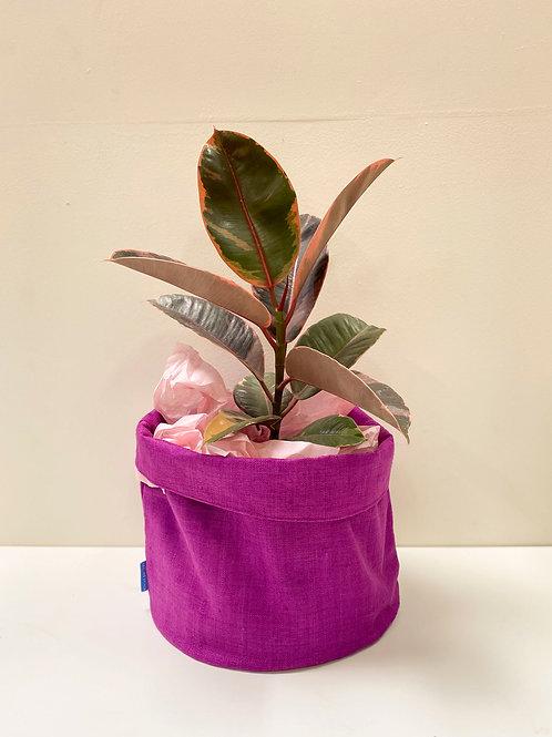 Room to grow Planters