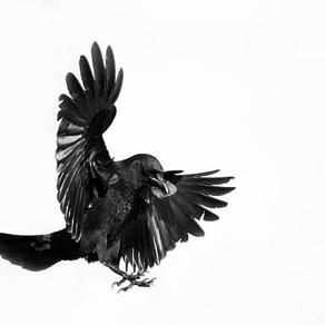 First Graders Share 'Seven' Ravens