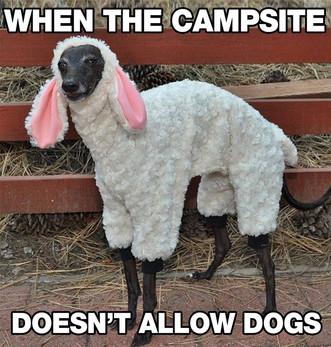 Camping Giggles.jpg
