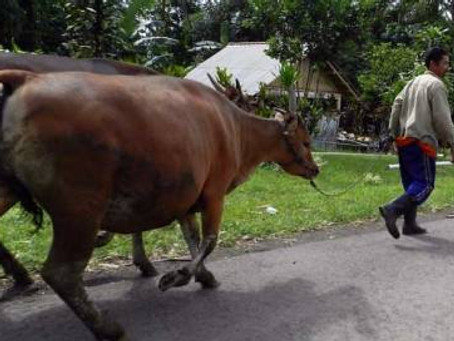Dispatch from North Bali: 2012