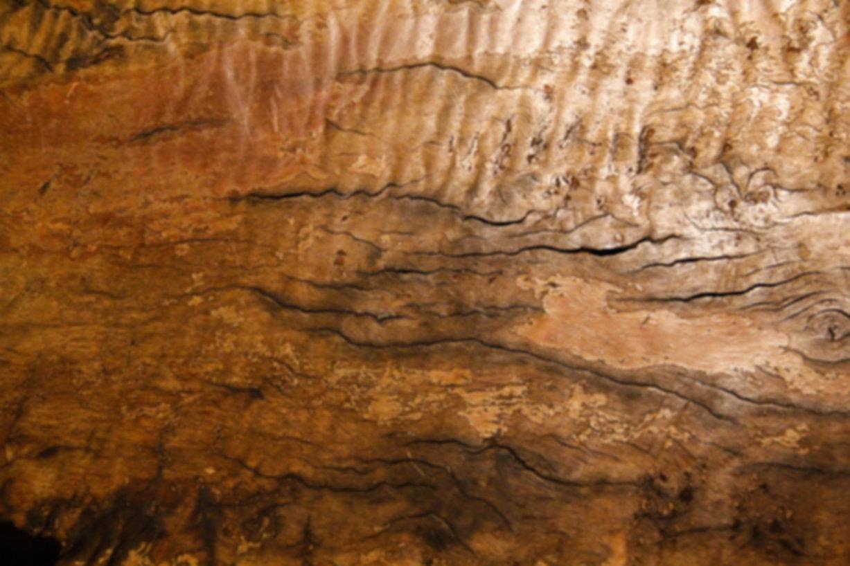 wood burl texture rough cracked natural