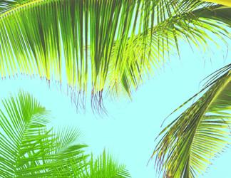 Tropical Peace